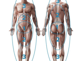 Muscle Activation